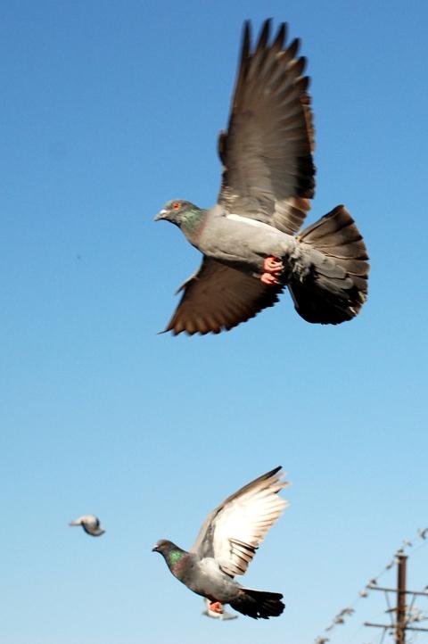 http://zgallery.zcubes.com/assets/Photos/Birds/DSC_0043.JPG